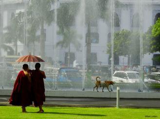Monks, Yangon, Rangoon, Myanmar