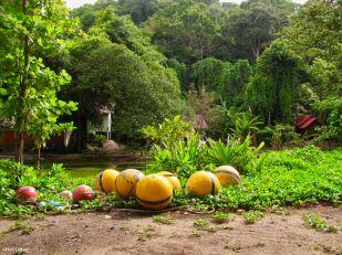Ko Similan Island, Phang-nga, Thailand
