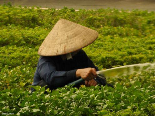 Ho Chi Minh City, Saigon, Vietnam